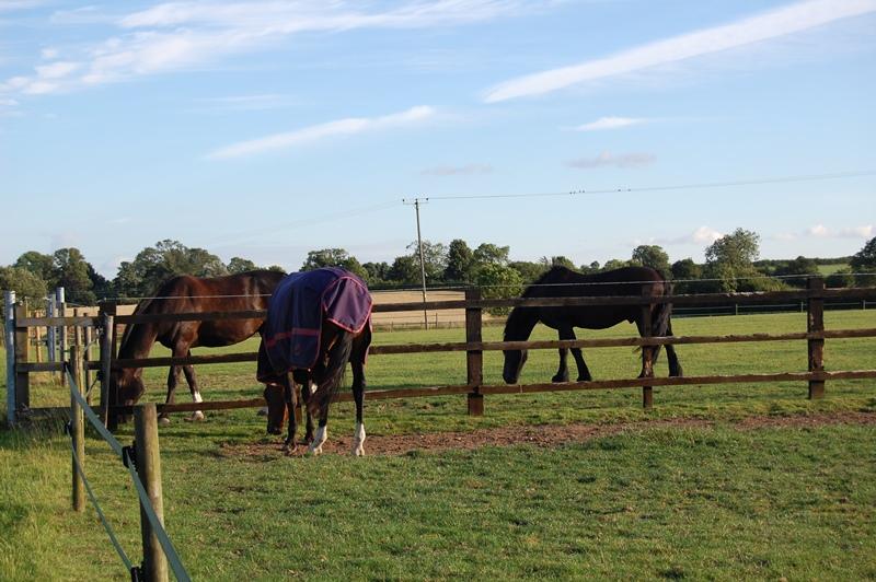 Retirement Horses Canter Lincolnshire